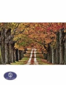 1200reeds tableau rug, 50*100 centimeters, code 2167T